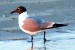 Identify shore birds